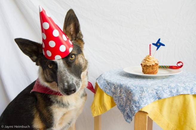 dog-birthday-cake-1